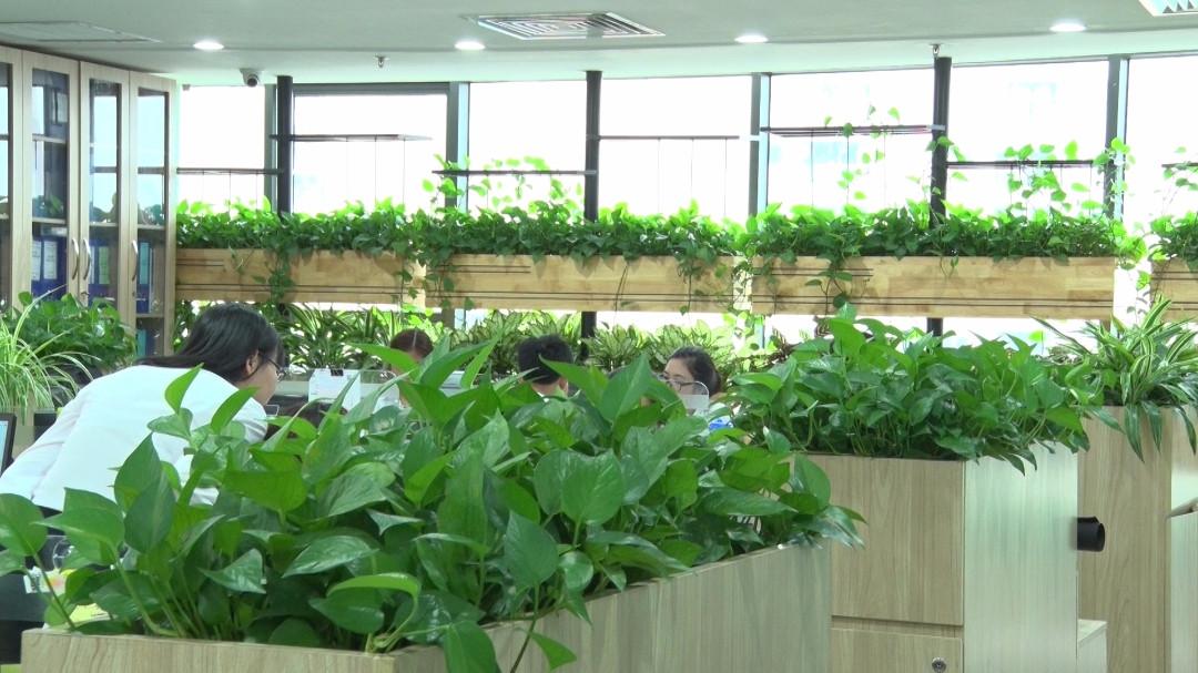 thiết kế văn phòng xanh hải phòng